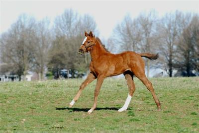 Preakness babies: A Curlin baby out of Dimple Pinch (Smoke Glacken x Eden Isle, by Coxs Ridge)