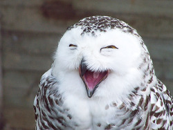 Because owls are awesome