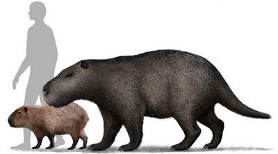 Josephoartigasia monesiThe largest rodent known. Only a skull has been found, so full restorations have to be estimated from close relatives or rodents known from the same time period. It would have possibly weighed up to 1,000 kg… a modern Black Rhino weighs 1,400 kg.