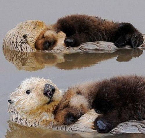 Otters in headlocks who may have been posted before.