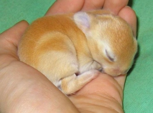 Baby Bunny via:cutestuff. For the Bunny Lovers :)