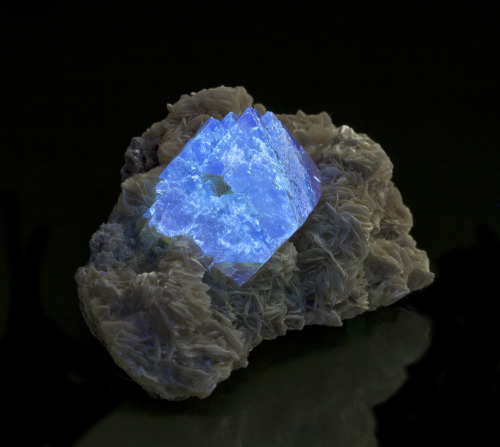 mineralia:  Scheelite on Muscovite from China by The Arkenstone