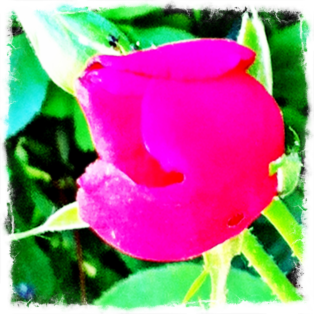 Rosebuds, why are you waiting to bloom?