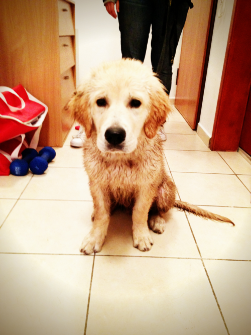 Muddy buddy, again