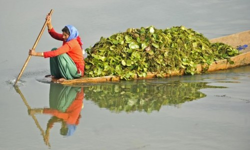 indie-skye:  indiyaaa:  A Kashmiri woman rows a boat in Dal lake, carrying lotus leaves used as cattle feed in Srinagar,India.  ☾ḮЙᴅḮΣ ☪ БΘĦϴ☽