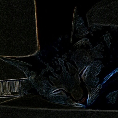 Sleepy Twitter cat (Taken with instagram)