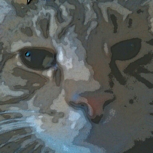 Extreme closeup Jake, via Paper Camera (Taken with instagram)