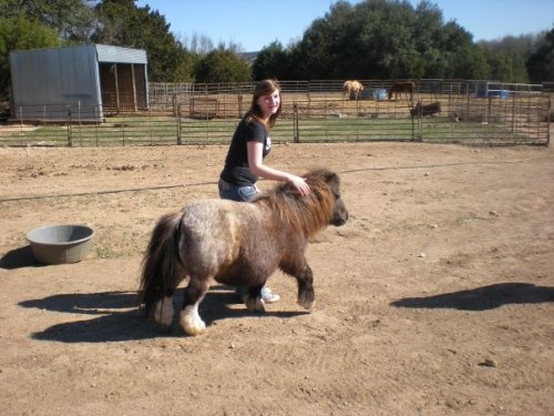 TYPE: Mini-horse. DIFFICULTY: Medium. As you can see, the mini-horse is actively running away from me as I am trying to touch it. LOCATION: Killeen, Texas. I was volunteering for the week at a ranch for kids with disabilities. NOTES: I'm not sure what the difference is between a pony and a mini-horse. This could actually be either, or both.