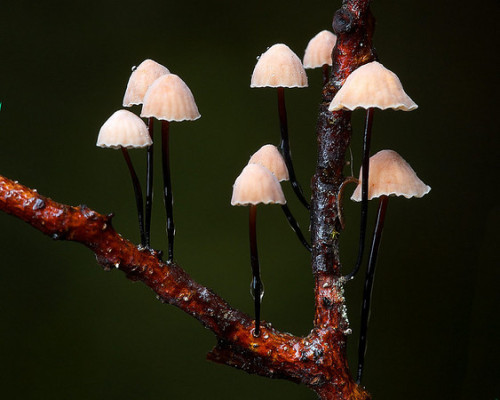 tiny-forest:  Mushroom blog cute little caps  I PORTEND YOUR GRISLY DEMISE FOOLISH MORTALS (also known as the gibbering mental breakdown following the realization of NO EARL GREY TEA at the daily tea-break, compounded by an unwanted human occupying the chosen spot of prime shadiness beneath the oak tree. Wearing matching socks no less. Tell me, shiny cockroach companion of mine with a bit of lint dangling from your left antenna, is the Universe telling me to start picking a hand-basket? I choose the cannibalised TARDIS one with bioluminescent polka-dots and free internet access. I can garnish it with demons' claws when I get there.)