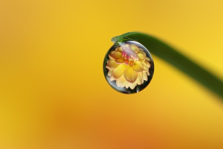 "abluegirl:  Macrophotography By Brian Valentine:  In his retired free time, former PhD Microbiologist Brian Valentine turned his attention and incredible talents to a love of macro photography. As a keen gardener, his backyard is filled with a plethora of photo subjects including insects and plants. In his very own backyard, Valentine uses Canon equipment to create these surreal scenes of images within images, reflections in water droplets that are all captured in camera. Valetine says macro photography, ""allows [him] to explore a relatively unknown world full of fascination."""