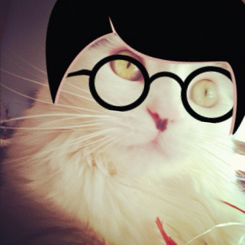 #hipster #petstagram #catstagram #cats #applified  (Taken with instagram)