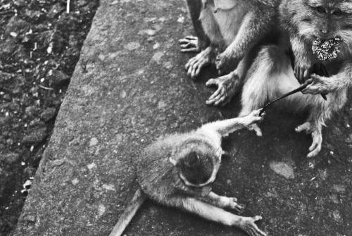 Monkey hours in the Monkey Forrest. Ubud, Bali.