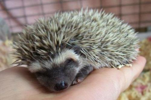 hedgehog had nap.