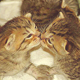 multislash:  ladyofdragons: ONG KITTIE KISSES!!! SO CUTE!!!  driftsmybitch:  windwave:  <З  OMG!!! <3 <3 *___*  Kitten kisses!!! :D