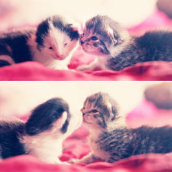 kymwo:  kitten kisses by ~emeraldiris