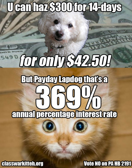 Pay Day Lapdog wants to scam teh kitteh. Don't let him.