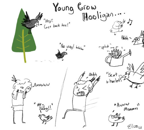 So a teenage crow has been outside this week, causing much shenanigans.  From what I've read, they just walk around causing trouble, because they can't fly yet.  Their mom just flies after them yelling at them to get back up in the tree, but instead they just stay out all night and expect to be fed dinner when they get home….such a lil hooligan!