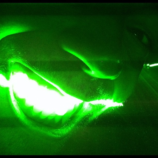 #smile for the #laser.  #color #green #lights #ig #igers #instagram #instaglam #instamood #beautiful #day #cincinnati #covington #jj #iphone4 #iphonesia #photooftheday #picoftheday (Taken with instagram)