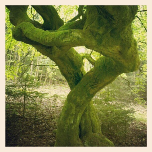The magical twisted tree (Taken with instagram)