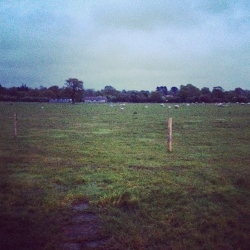 The English countryside. Yes, sheep. (Taken with instagram)