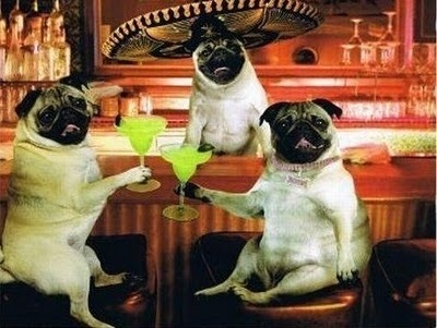 emotipugs:  The feeling you get when you finally get to the bar on a Friday night and it's summer and the sun's still out and the windows and doors are open and you finally fully exhale for the first time after the longest week ever.