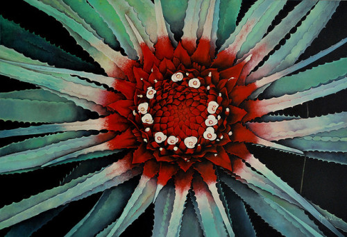 Pintura - Bromélia (painting - oil on canvas) by Márcia Valle on Flickr.A great painting of Orthophytum burle-marxii.