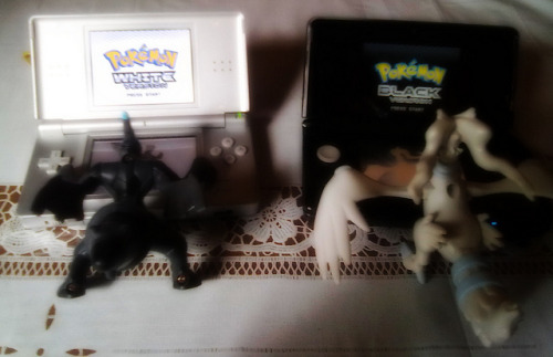 Zekrom & Reshiram Playing Pokémon Black & White on Flickr.