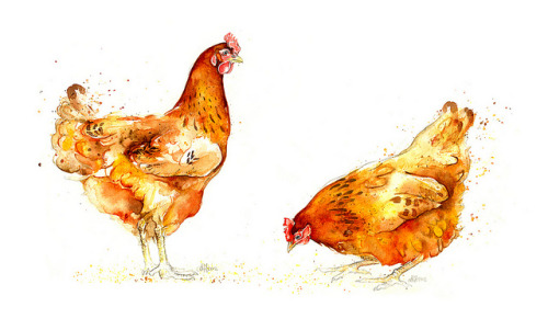 fresharte:  Hens II and III  by Amy Holliday on Flickr.