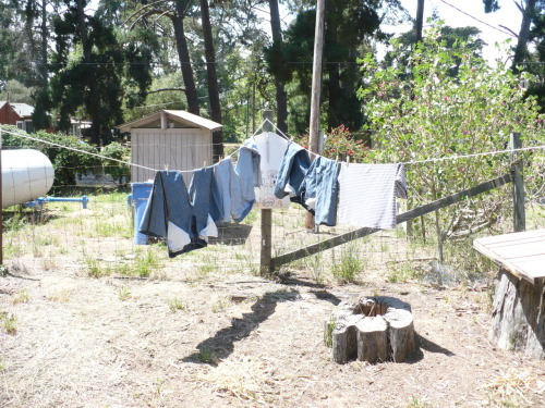 Laundry! Unfortunately, I have yet to time my line-drying properly. I always hang things out too late, then the sun goes away and I have to finish them in the dryer. But I'm going to keep trying.