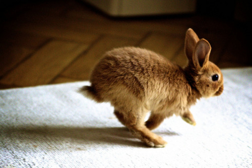 exhalatio:  Run Rabbit Run by murmel.clausen on Flickr.