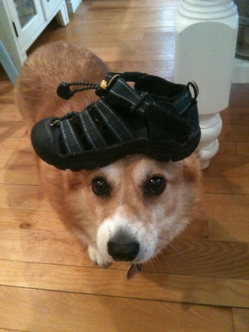 corgiaddict:    http://thingsonhazelshead.tumblr.com/ Submitted by: Adam -> http://belligerenceandbeauty.tumblr.com/  i would do this