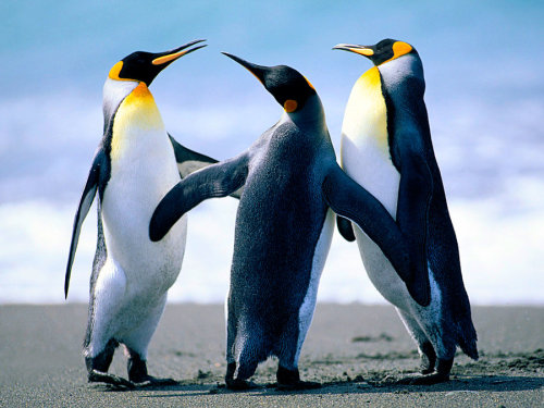 magicalnaturetour:  Penguins that are hugging by ~Olivia-Hedgehog :)    Group hug!