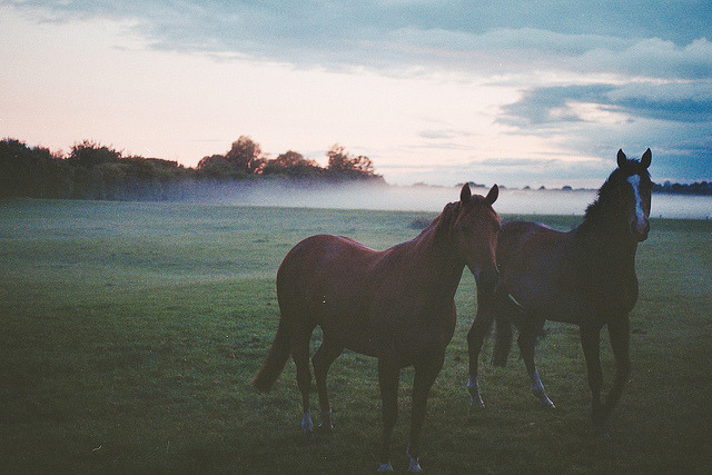 untitled by Sophie Greenidge on Flickr.
