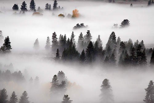 e-aves:  Methow Fog (by Ed.Stockard)