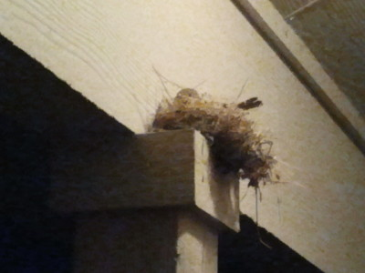 Random bird nesting in my back patio