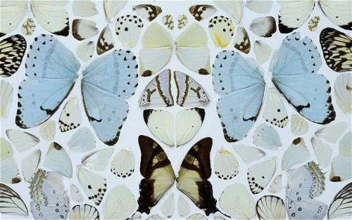 Symphony in White Major Absolution II (detail) by Damien Hirst, 2006. This is the first, and probably last, Damien Hirst piece I will post. Anyone that knows me will know that I am not a fan. To me, this piece is beautiful and yet unforgivingly upsetting. It doesn't make me think about how fleeting life is or the beauty of nature's life cycles. It simply makes me uncomfortable. However, whatever you feel when you look at a Hirst, it is sure to be a strong feeling, positive or negative.