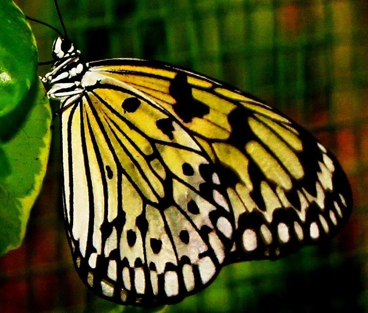 I went there last summer….san diego zoo safari park-butterfly exhibit#macrochallenge #california #iPhoneography #streamzoo #teamrebel #CapturedMoment(from @mnsd on Streamzoo)