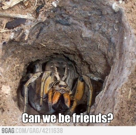 9gag:  Lonely Spider just wants to be your friend