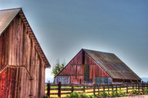 Barns of MacArthur Series….by Jeanean Gendron MacArthur, California is a beautiful little valley that is protected by the Majesty of Mount Shasta. A beautiful little portal that time has past by. These rustic bards are beautiful to me.