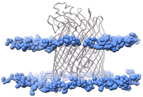 FhuA; a TonB-dependent transporter from the outer membranes of E.coli. Rendered with VMD