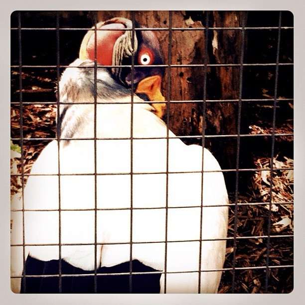 Who you looking at?!? #bird #zoo #animal #cage #picoftheday #dontgivemetheeyebirdie (Taken with Instagram at Zoo Atlanta)