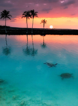 peace-and-awe:  4bduct:  Sunset at Kiholo Bay by rubinphoto on Flickr.  gorgeous