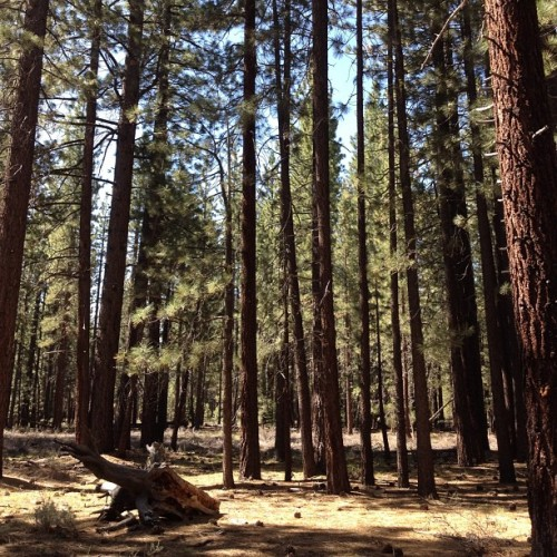 I ❤ trees! #trees #nofilter #hiking #california #lifeisgood #ilovemylife #soutlaketahoe  (Taken with Instagram at City of South Lake Tahoe, CA)