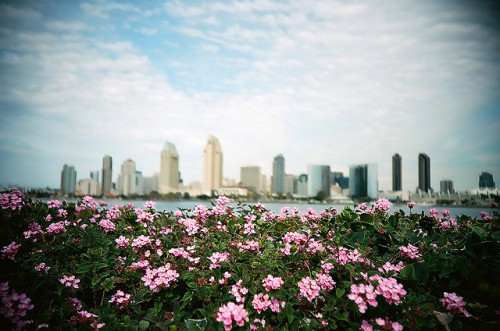 The Finest City by The Dalai Lomo on Flickr.