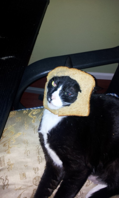 This is Paco wearing 60% whole wheat.