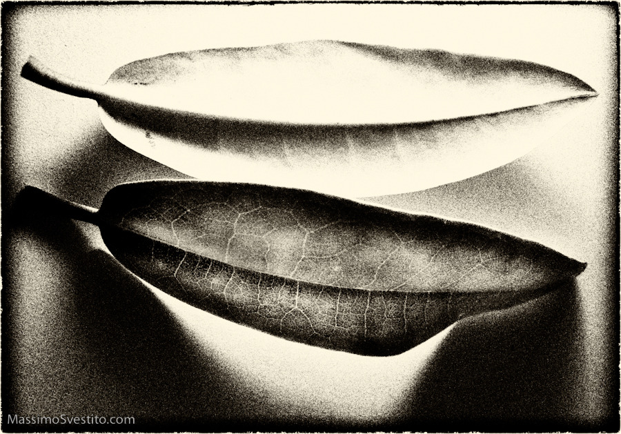 Two Leaves, Copyright 2011 Massimo Svestito