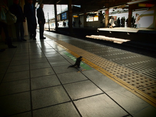 Waiting For The Yamanote-sen.