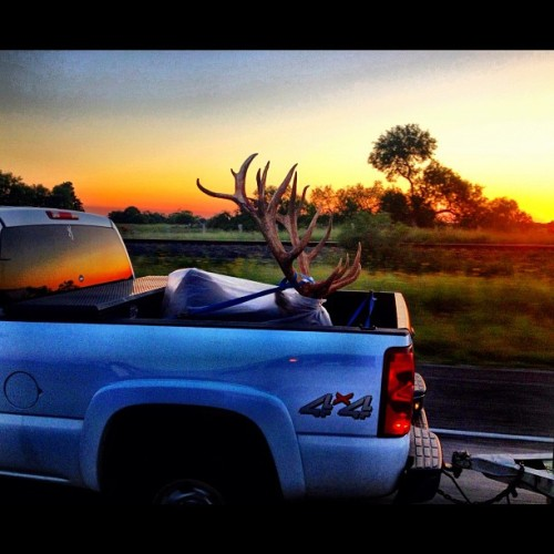 #roadtrip #texas #country #hallpass #onlyintexas #sunset #hunting #deer #bambi #tailgate #buck #killer#hunter #truck #goodtimes #4x4 #gothim  #pictureoftheday #instamood #instadaily #igdaily #picoftheday #bestoftheday #iphoneonly #instagramhub #photography  #iphonesia (Taken with Instagram at Cameron County)