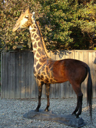 The Horaffe- half horse, half giraffe.Sold for $15,000.