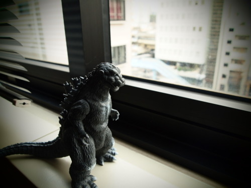On overcast days, `Zilla is sometimes pensive.